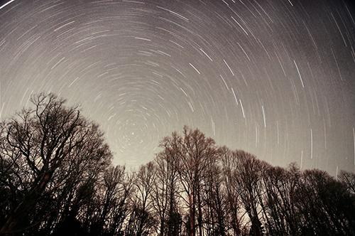 EllenRDavidson-stars