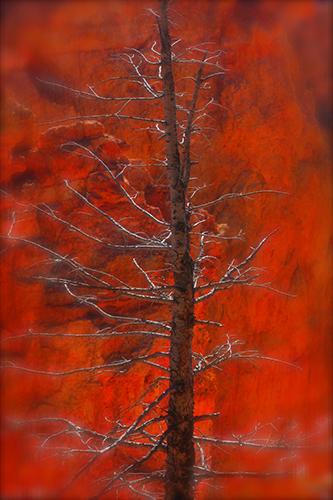 EllenRDavidson-tree